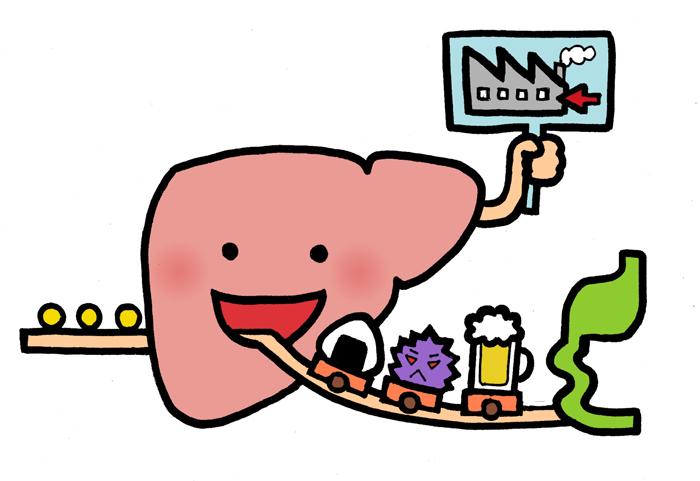 脂肪肝イメージ